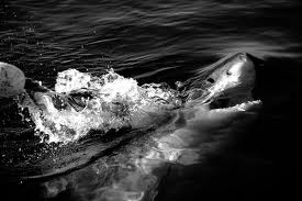 Terminli Pronti Per Squali Pescasport
